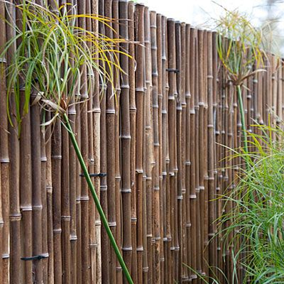 Garden Ideas To Hide Fence care-free garden design | block wall, cement and yards