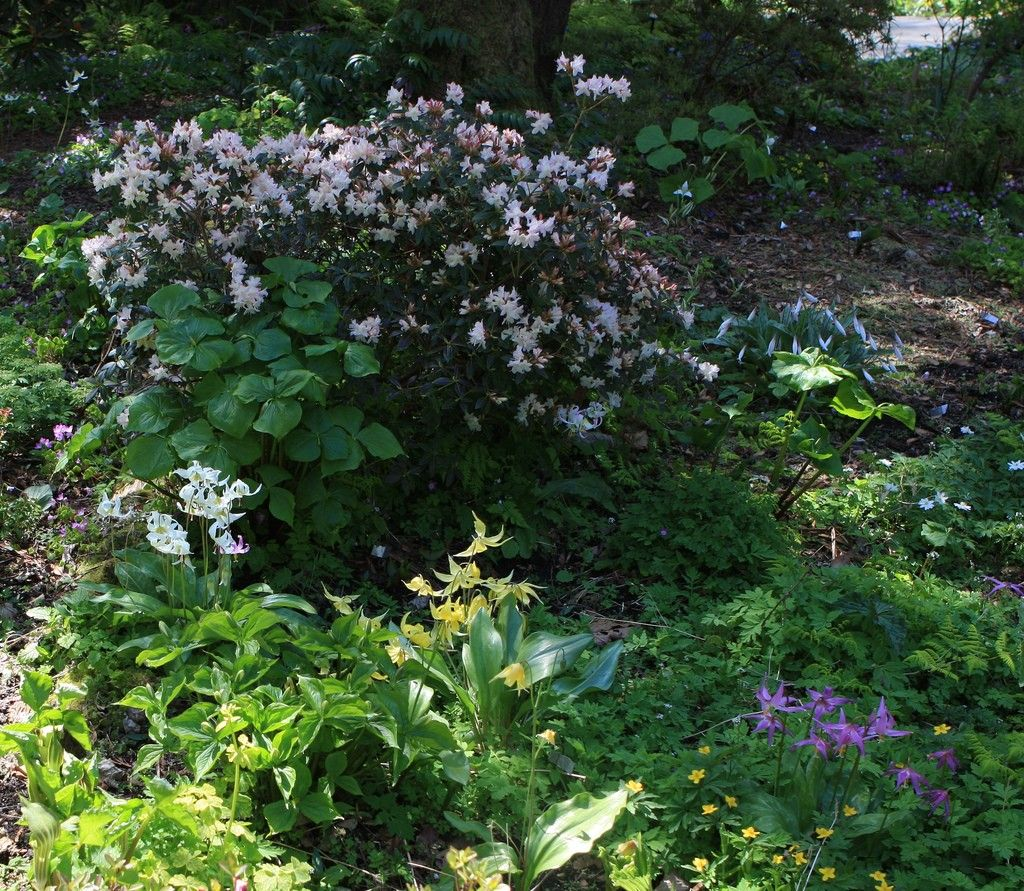 Plants For Woodland Gardens Ideas And Tips For Creating A 400 x 300