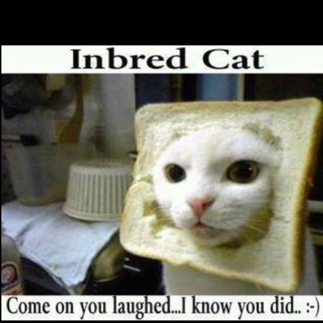 inbred... in bread.. ha ha