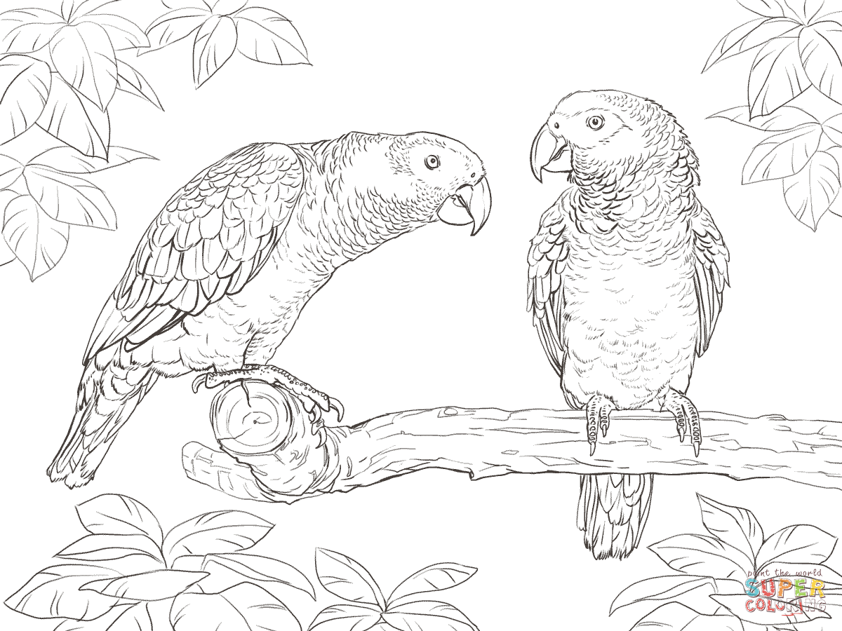 Two African Grey Parrots coloring page | SuperColoring.com | Art ...