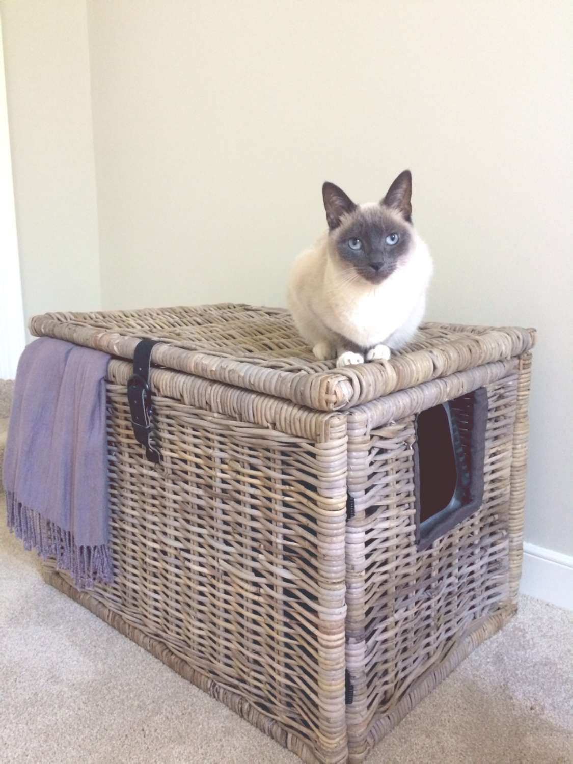 17 clever ways to hide the litter box in 2020 cat litter