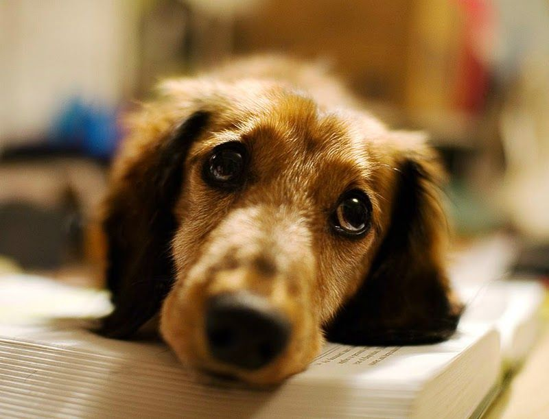 Sad-Puppy-Face-Picture-1.jpg (800×611)