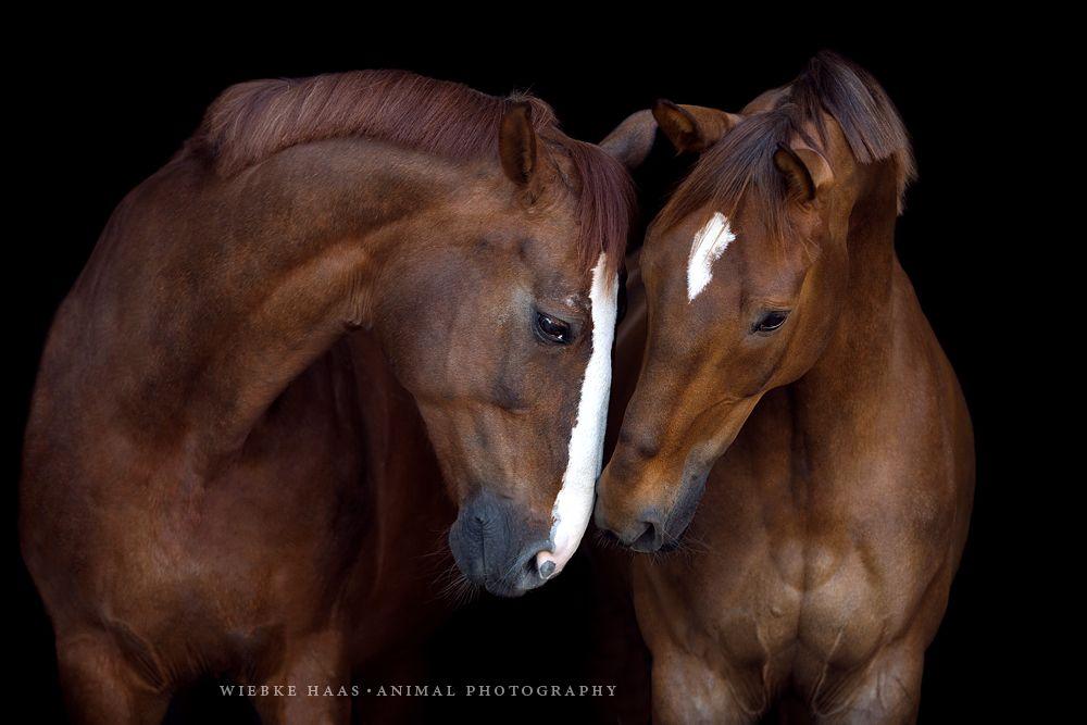 Sammelshooting In Mecklenburg Pferde Schone Pferde Pferde Und Hunde