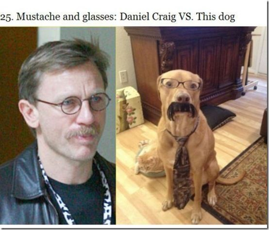 Fashion War Between Celebrities And Dogs Who Wore It Better 25