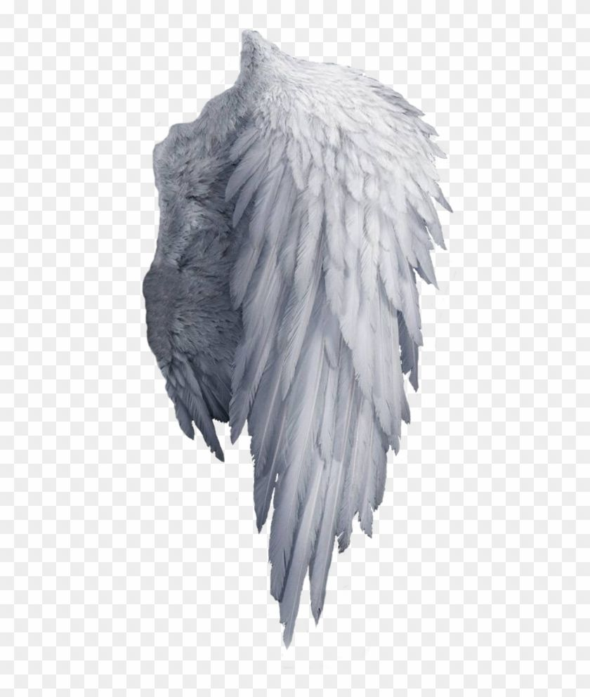 Find Hd White Angel Wings Png Png Download Transparent Png To Search And Download More Free Transparent Png Image Wings Png Angel Wings Png Angel Wings Art
