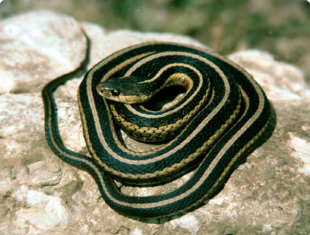 Learn How To Identify A Venomous Snake And What To Do If You Get