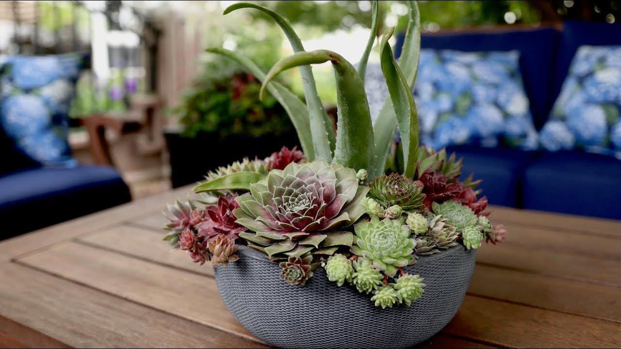 Succulent Inspiration Garden Answer Youtube With Images