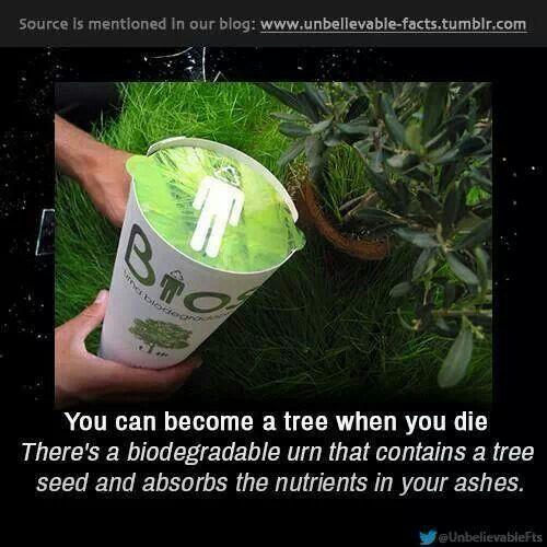 Biodegradable urn with tree seed | Biodegradable products