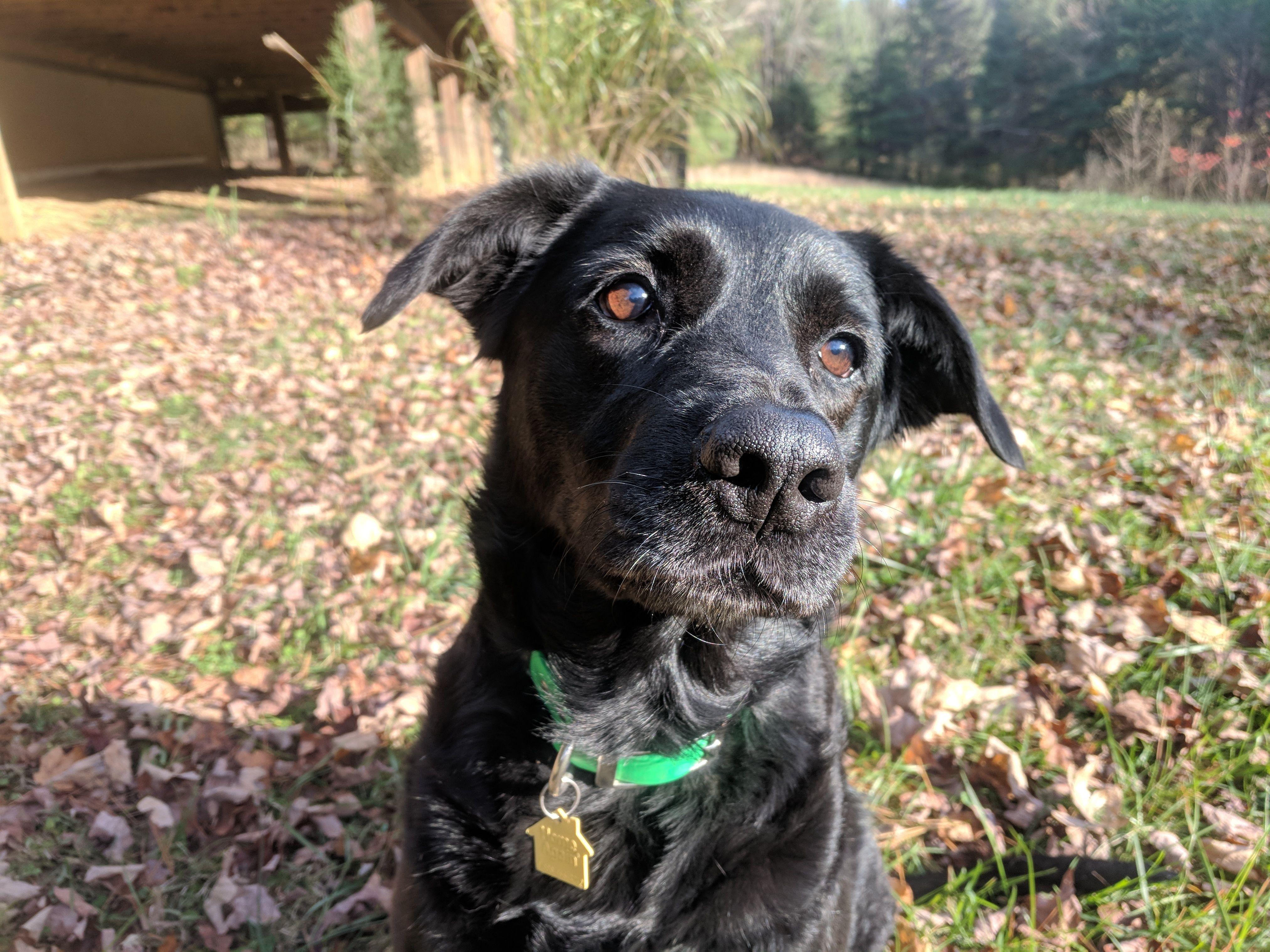 Adopt Jennyadopted! on Labrador retriever, Avon lake, Dogs