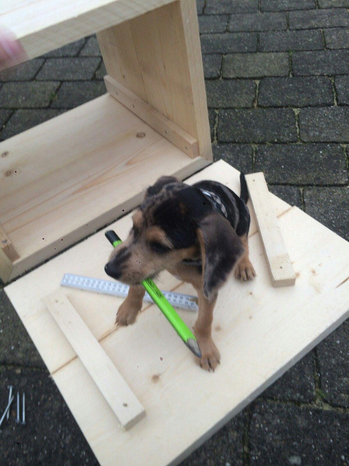 Pip als pup en natuurlijk helpen bij het klussen