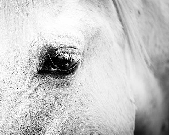 Horse art horse decor black white horse photography horse wall art black white horse print nature