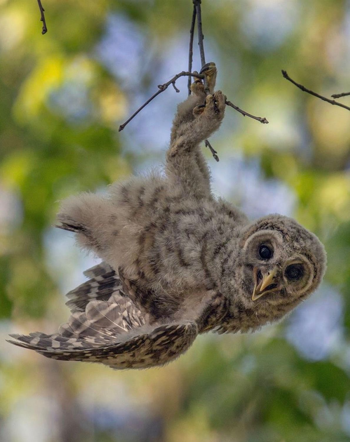 Resultado de imagem para corujas na natureza