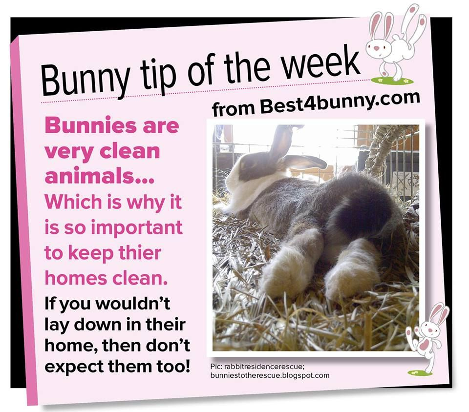 Bunny Trivia 9 Amazing Facts About Pet Rabbits: Bunnies Are Very Clean Animals & They Love