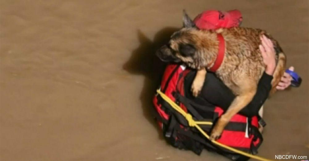 Rescued Dog Plants Wet Kisses On Fireman