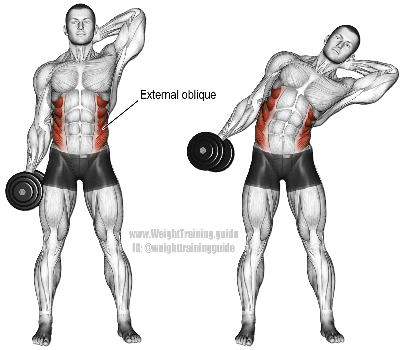 Dumbbell side bend. An isolation exercise. Target muscles ...