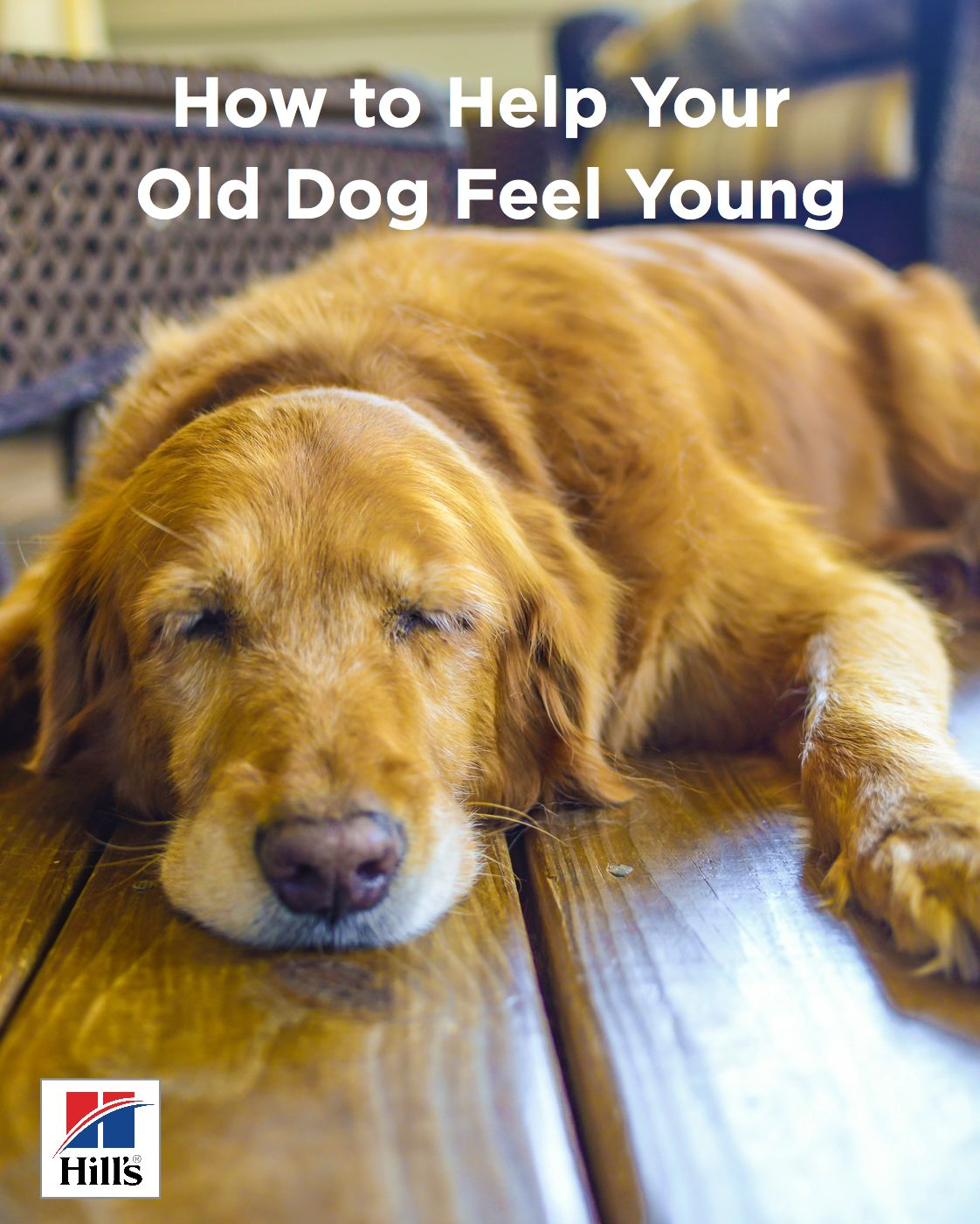 How To Help Old Dogs Feel Young Again Hill S Pet Old Dogs Feel Younger Dog Care