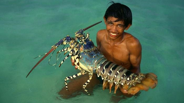 How Big Was The Largest Lobster Ever Recorded Seafood Pinterest