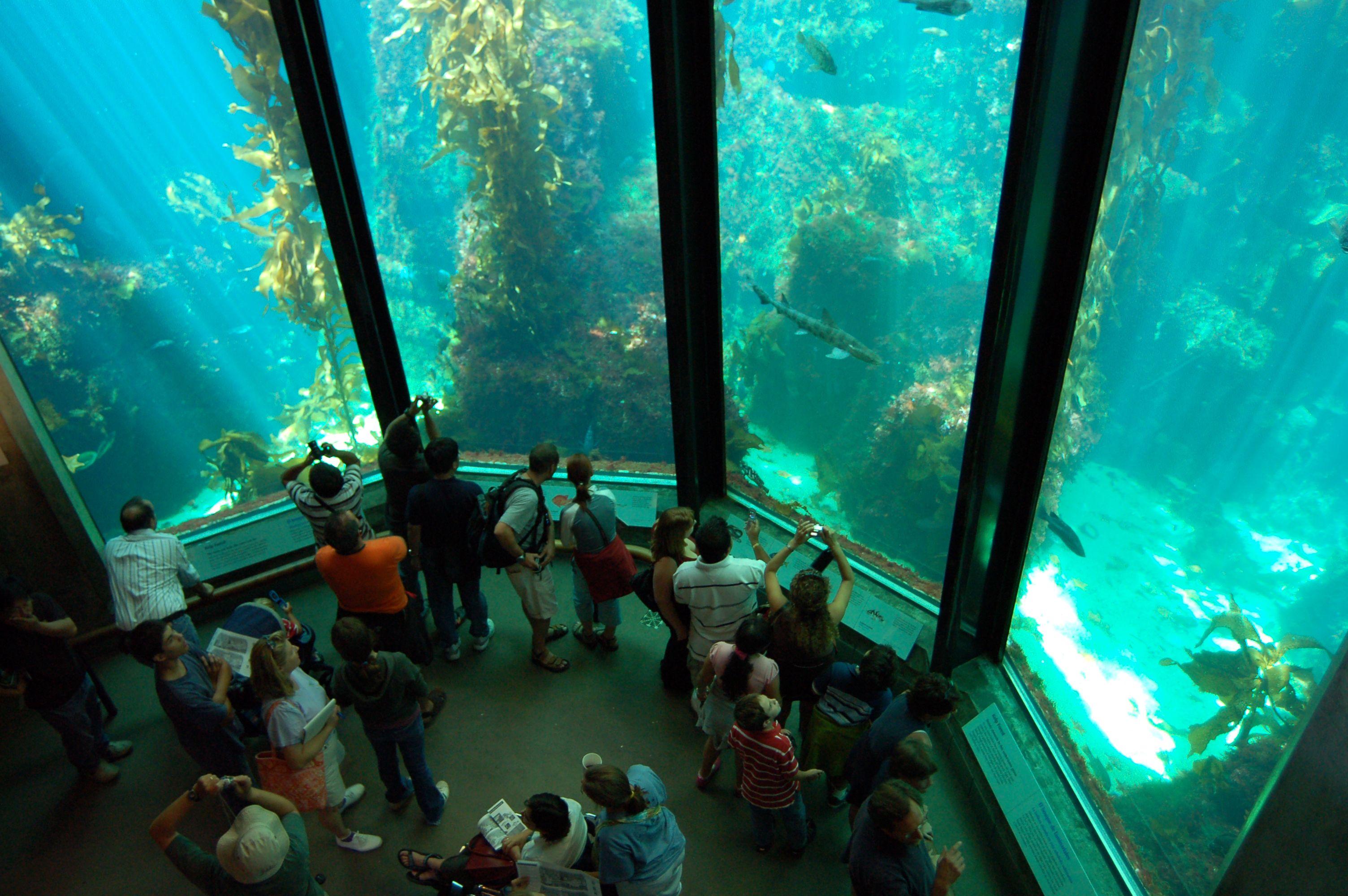 Image Gallery Monterey Beach Aquarium
