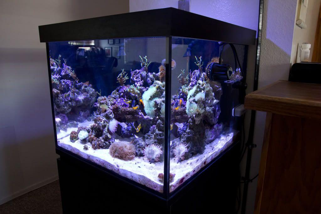 50 Gallon Rimless Cube W Kessil A350 Reef Central Online Community Aquarium Aquascape Aquarium Saltwater Aquarium