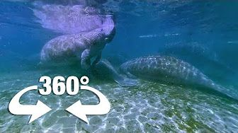 3:20  Let's Go Places: Florida | Oh, the Huge Manatees! (360