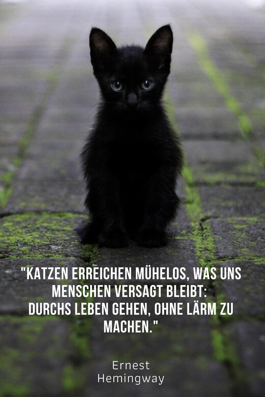 Die Besten Katzenspruche Und Zitate Beruhmter Personlichkeiten Katzen Zitate Spruche Katze Katzenspruche