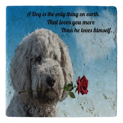 White Poddle Dog Puppy With A Red Rose Dog Quote Trivet Zazzle Com Dog Quotes Dogs And Puppies Poddle