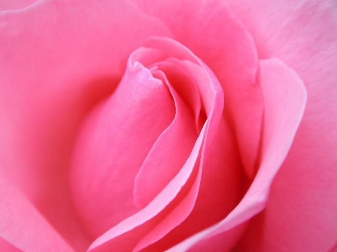 40 Beautiful Flower Wallpapers for your desktop | Best Flower ...