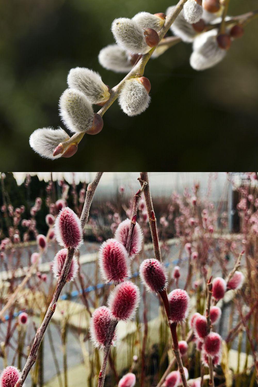 Wiosenne Bazie Plants Flowers Dandelion