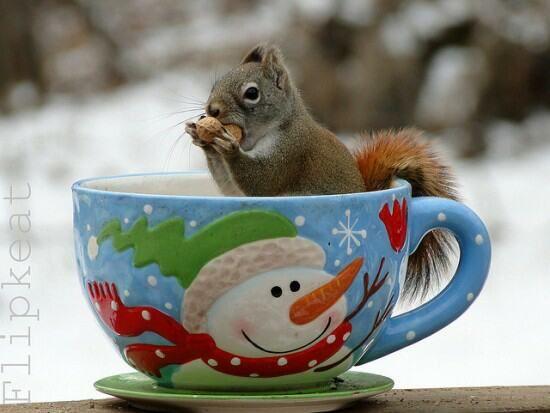 Squirrel cup.