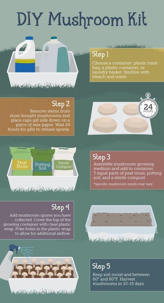 die besten 25 how to grow mushrooms ideen auf pinterest. Black Bedroom Furniture Sets. Home Design Ideas
