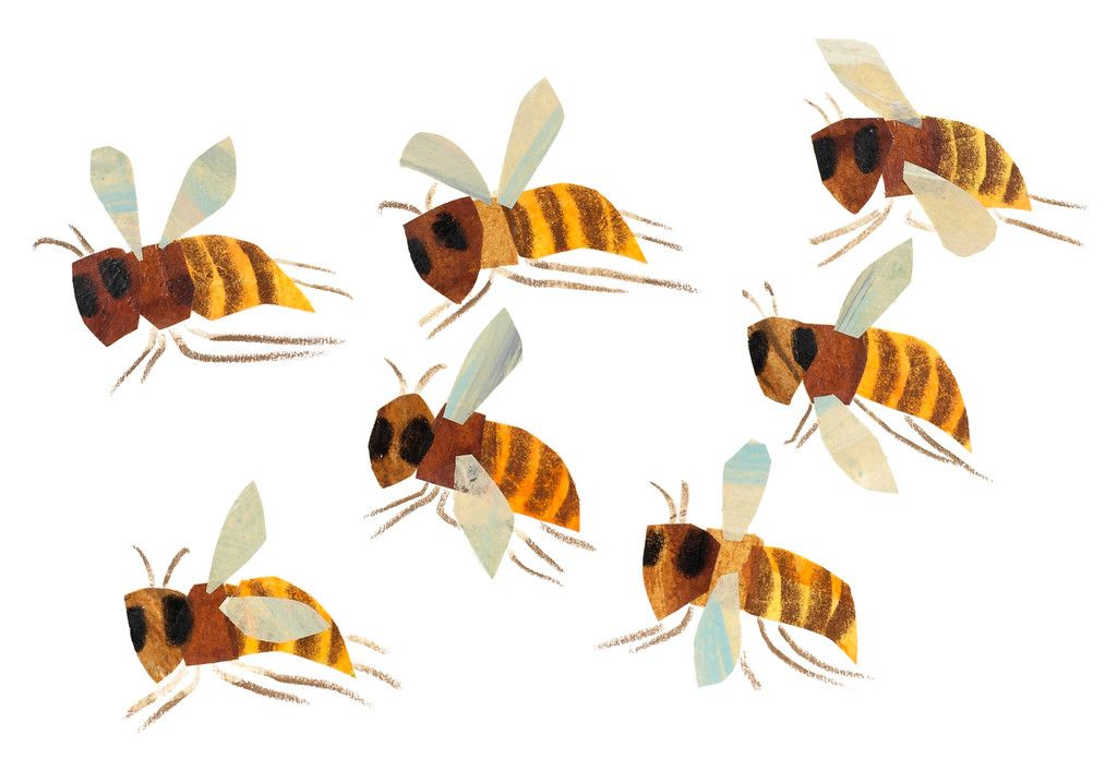 The Art of Eric Carle: Bees, Butterflies, and Other Bugs | art ...