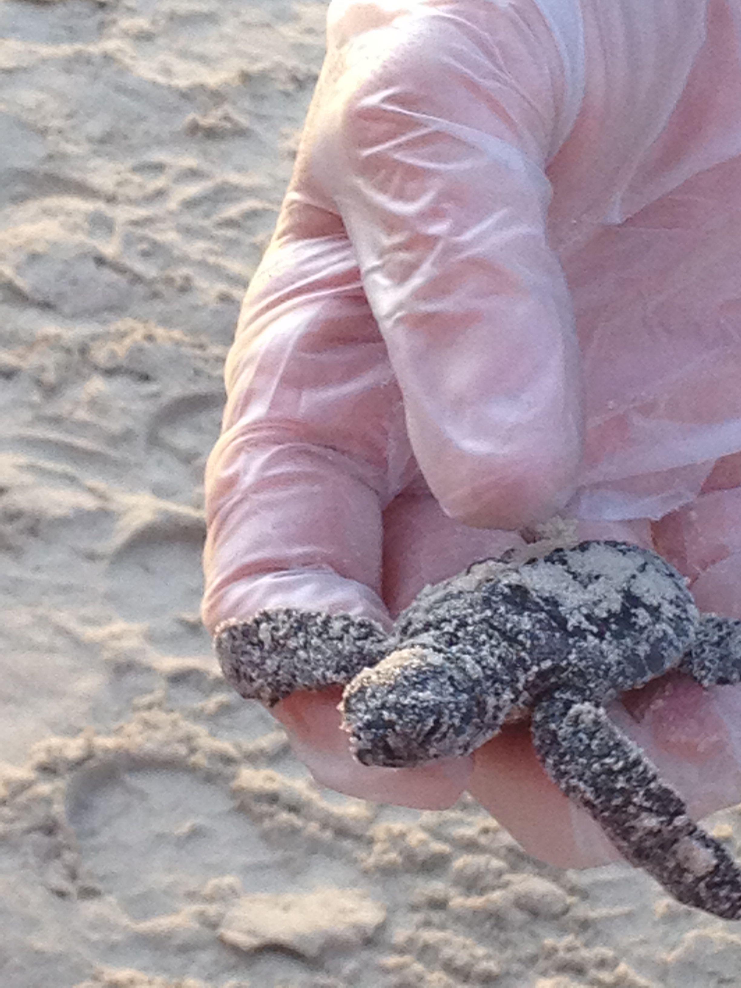 Pin By Vicci Rollins On Port Aransas Beach House Rental Sites And Sandfest Port Aransas Texas Port Aransas Texas Beaches