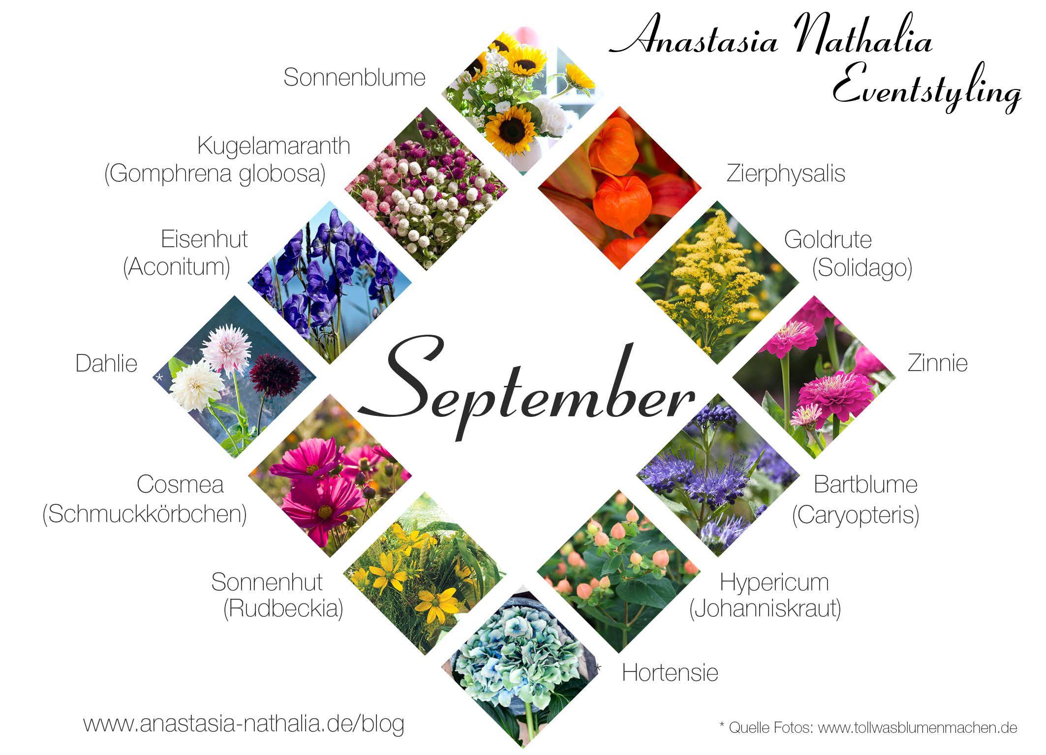 September Noch Einige Warme Sonnenstrahlen Und Schon Die Prachtigen Farben Des Herbsts Die Farben Sind September Blumen Blumen September Hochzeit Juli Blumen