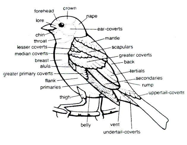 Bird Body Labeled To Help In Identification