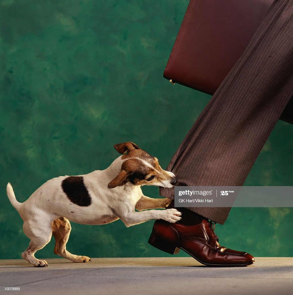 Dog Nipping At Your Heels In 2020 Dog Nipping Illustrations Posters Graphic Illustration