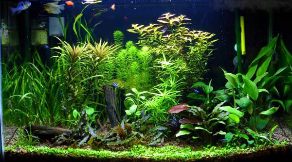 Image result for community aquarium
