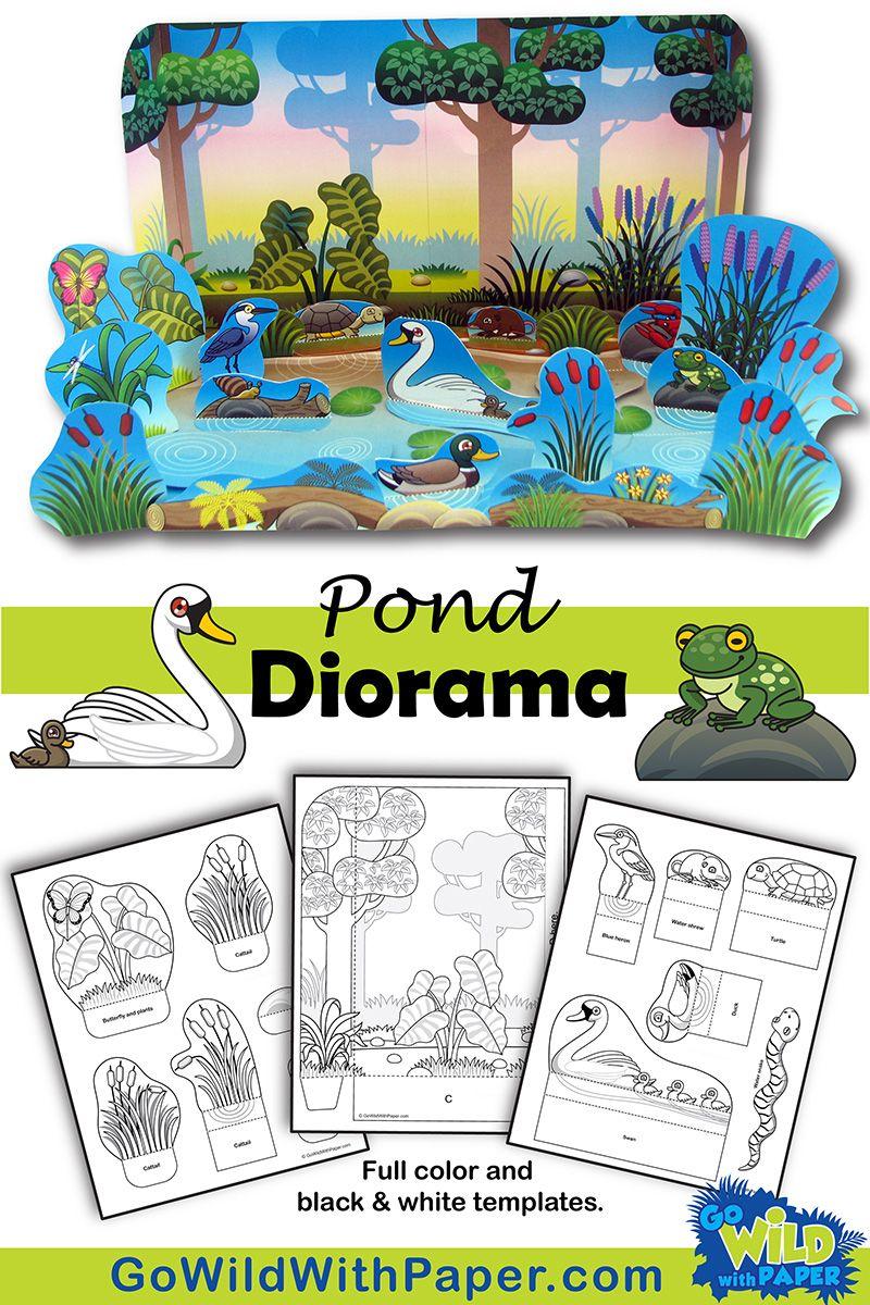 Pond Diorama Project Diorama Habitats Projects Animal Habitats [ 1200 x 800 Pixel ]