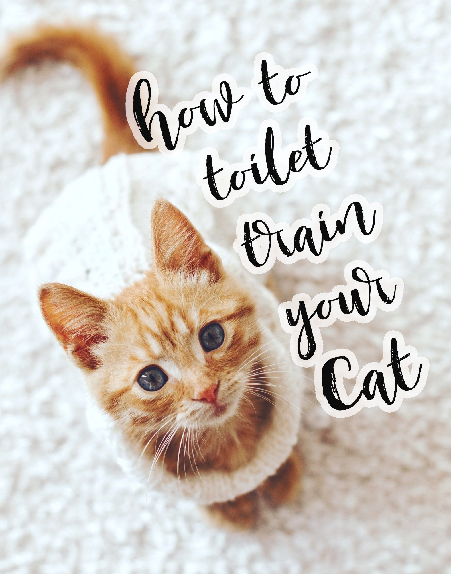 Litter Kwitter Cat Toilet Training the Easiest Way That Works