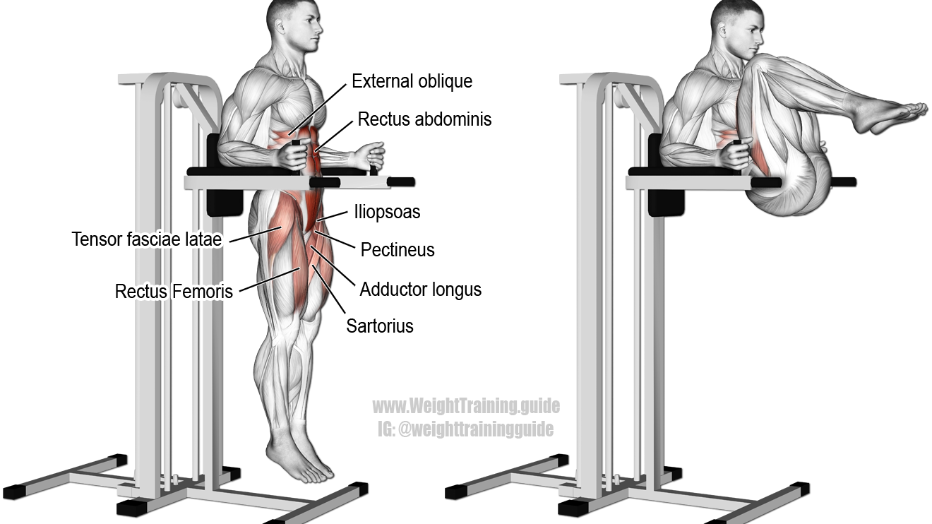 Dumbbell Bulgarian Split Squat Guide And Video Weight Training Guide Leg Raise Exercise Chair Legs Lower Body Workout