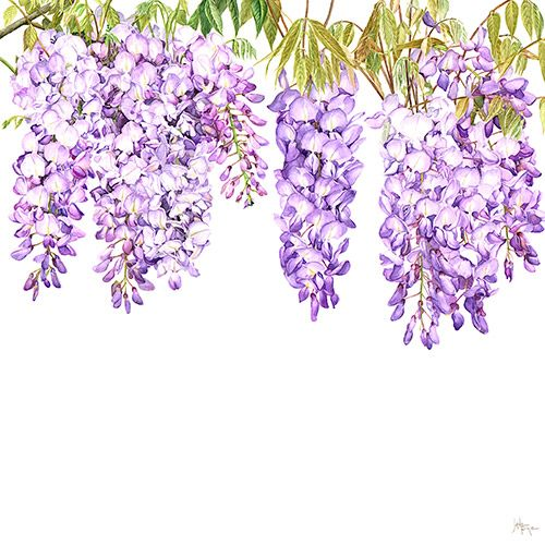 Vines Clipart Images 1 674 Png Format Clip Art For Free Download Pngtree In 2020 Vines Flower Painting Watercolor Flowers
