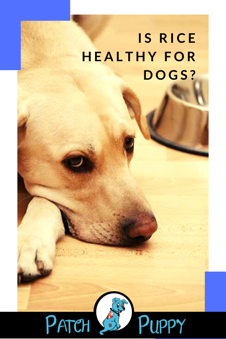 Is Rice Healthy for Dogs? Grain free dog food, Dogs, Can