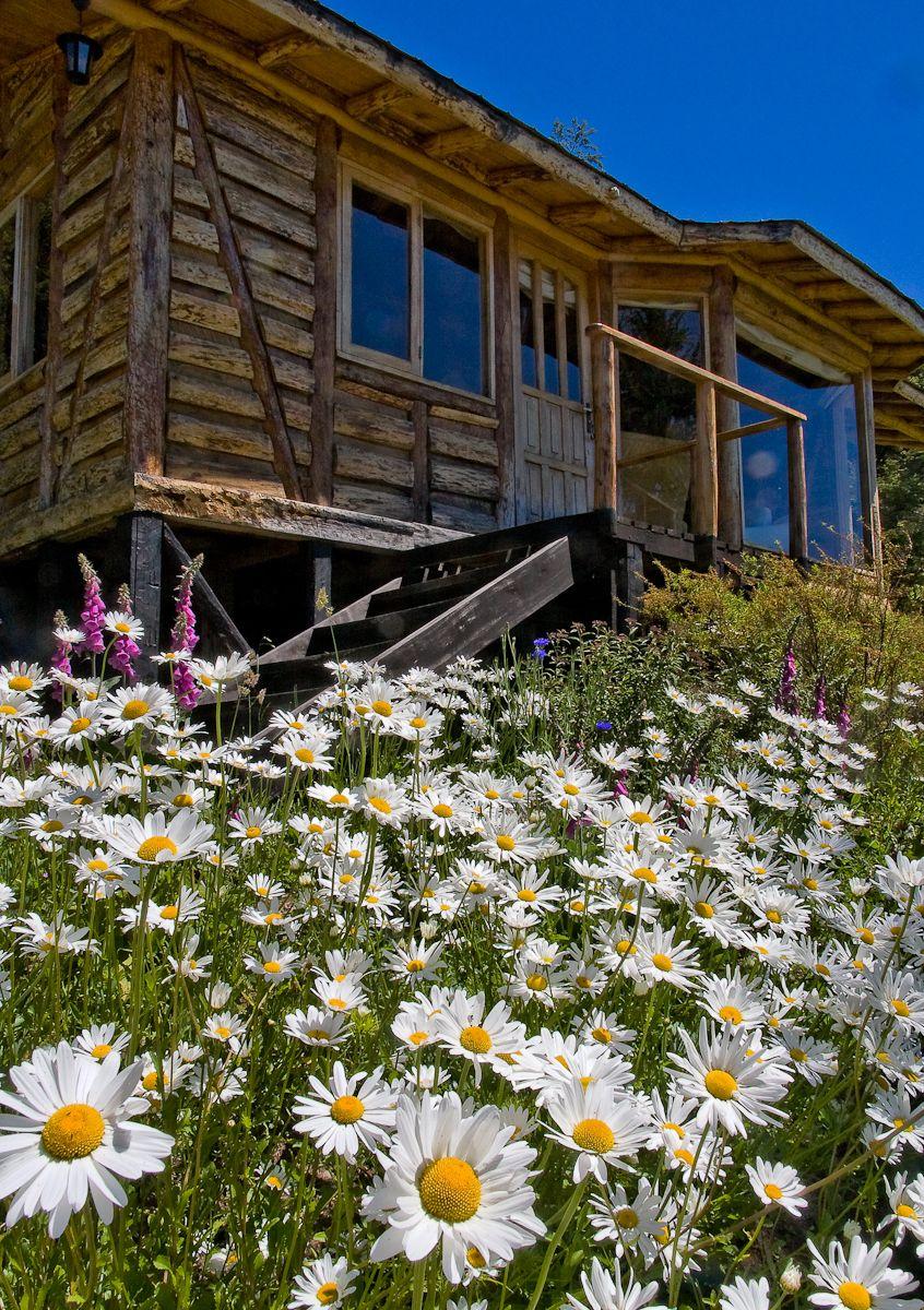 Wild flower garden around our cabins Mallin Colorado on