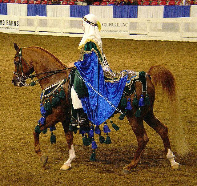 Native Arabian Costume Horse by Heather Moreton Abounader
