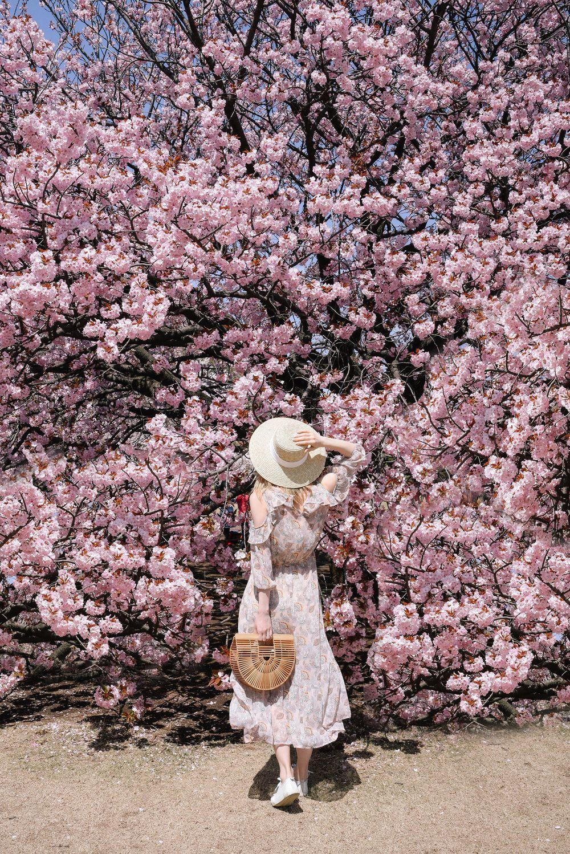 Shinjuku Gyoen Park Tokyo Full Bloom Sakura 2017 Cherry Blossoms Japan Pink Spring Cherry Blossoms Cherry Blossom Japan Japan Spring Sakura Bloom