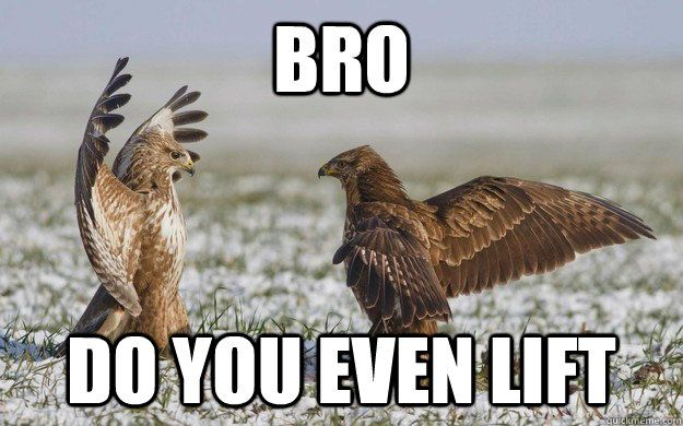 Owl Puns Google Search Amuses Me Pinterest Funny Animals