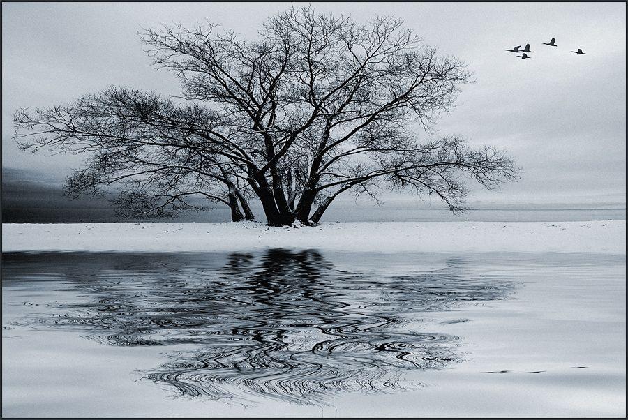 Winter Flight By Igorlaptev Deviantart Com On Deviantart Winter Photography Winter Flights Winter Scenes