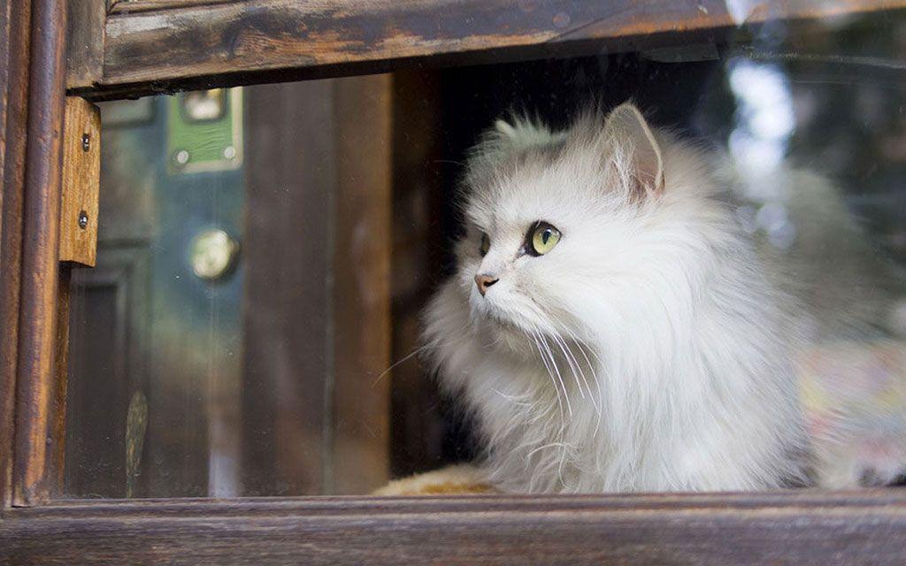 Chat Blanc Fenetre Animales Animaux Les Plus Mignons Animaux Beaux