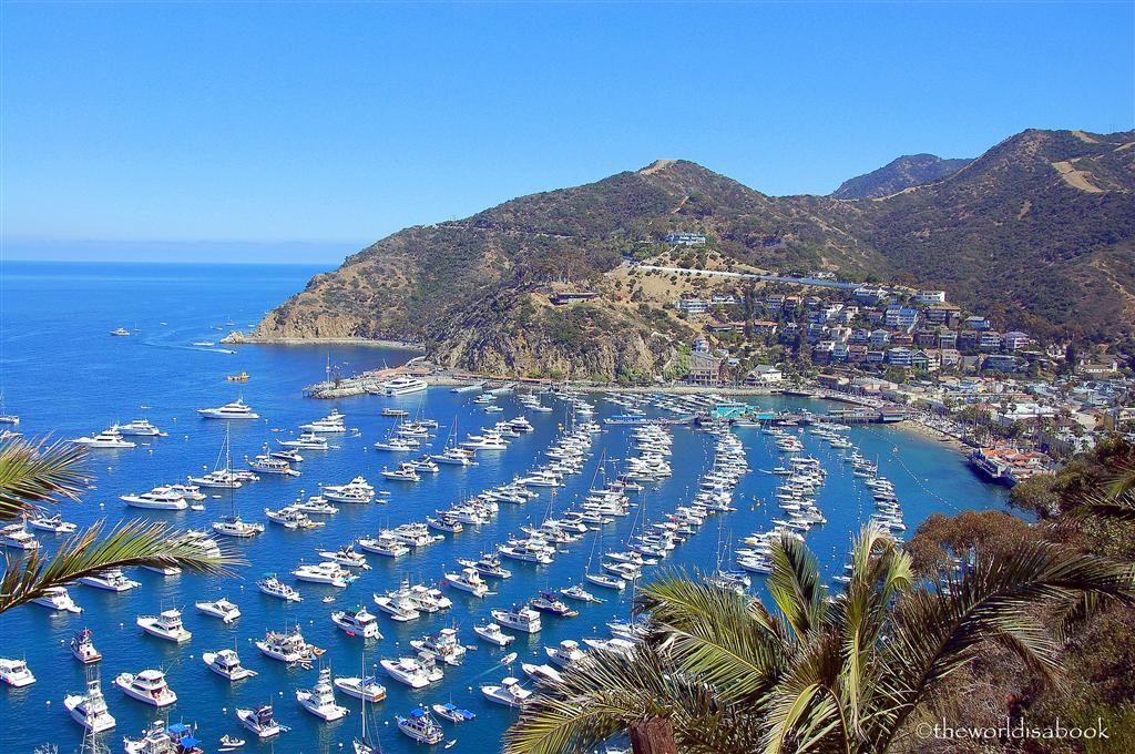 Things To Do In Catalina Island With Kids The World Is A Book Catalina Island San Diego Travel Day Trips