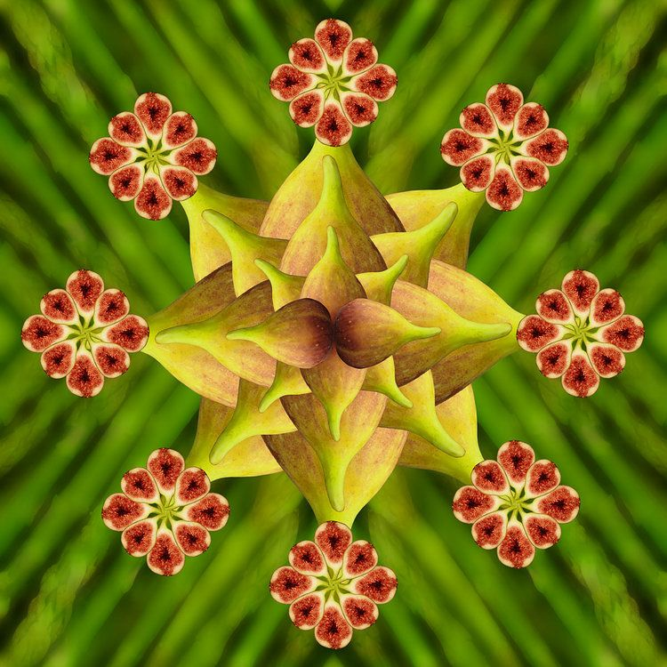 Fig Star On Asparagus Kalidescope Rainbow Maker Fractal Art