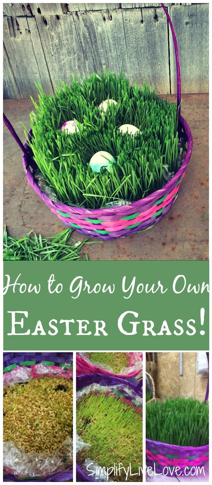 Heres how to grow your own easter basket grass in less than a week heres how to grow your own easter basket grass in less than a week its not hard and the supplies arent that expensive do this fun easter proje negle Image collections
